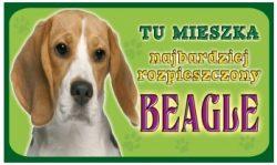 BEAGIEL