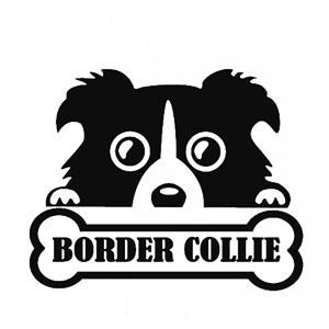 border collie3