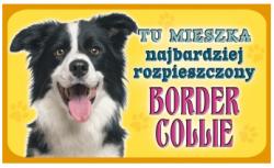 border collie555